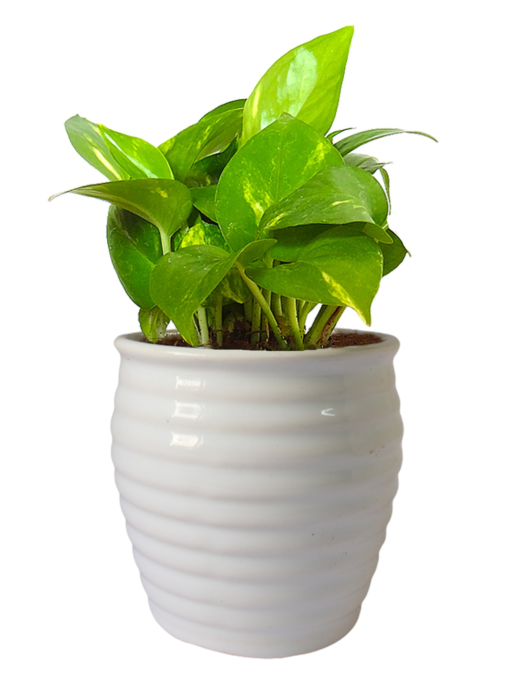 Indoor Plants That You Should Plant in Your Home - Just Interio